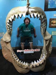 chase shark
