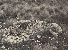 220px-Sheep_killed_by_kea_(cropped)